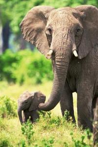 Sådan dekorere med elefanter