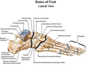 tegn på brud i foden