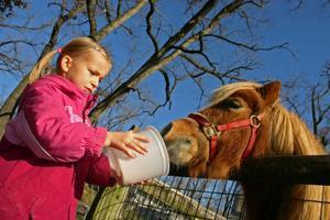 Sådan Feed Rice Bran til en Undervægt Horse
