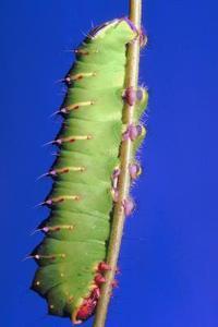 "Håndværk & Aktiviteter for ""The Very Hungry Caterpillar"""