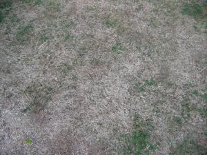 Sådan fjernes Thatch Fra Augustine Grass