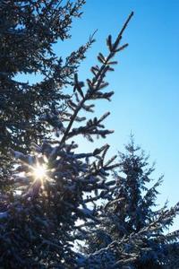Sådan gang sprøjtning af Malathion om grantræer