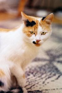 Hvordan til at neutralisere Cat Urin