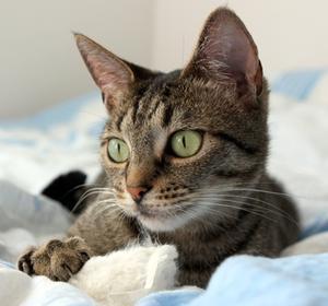 Hvad gør du, hvis en kat har diarre & er opkastning