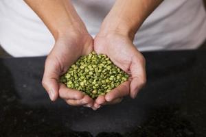 Science Fair projektideer til Voksende frø i væsker