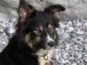 Hvorfor en hund hoste op hvidt skum?