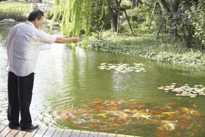 Fish Pond Parasitter