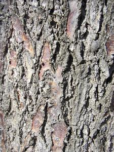 Kunsthåndværk Brug bark
