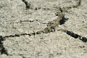 Træer til Hard Clay Soil