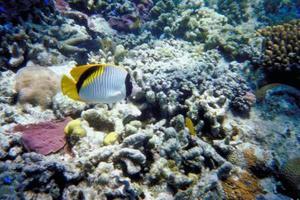 Faktorer, der påvirker koralrev