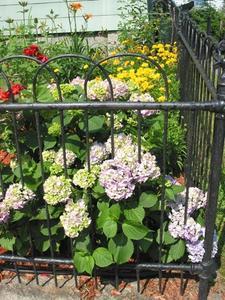 Farverige buske, buske og planter til små haver