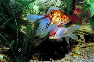 Hvad er den bedste Aquarium Filter til store tanke?