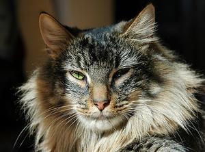 Tests, der er nødvendige for blodig afføring hos katte