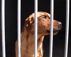 Rengøring hundekenneler med blegemiddel