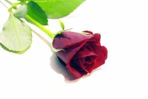 Hvordan man tegner en Rose for børn