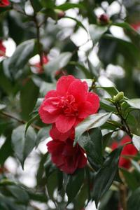 Halvskygge Blomstrende Planter