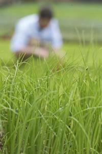 Kan du lægge Sod Over Grass?