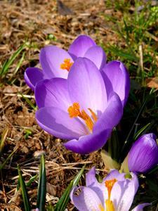 Om ikke-Blomstrende Planter & Blomstrende Planter