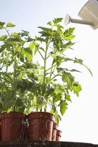 Har du brug for Heat Mats for Seed Start?