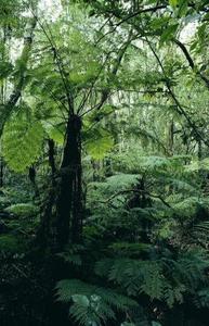 Tropiske løvskov dyr og planter