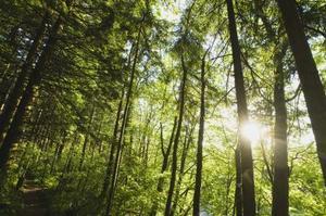 Forholdet mellem abiotiske & biotiske komponenter i en skov økosystem