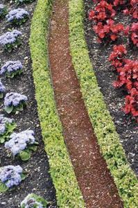 Hvad man skal plante en Clean Hedge Look