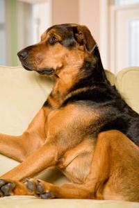 Sympati gaver til vedtagelsen af en hund
