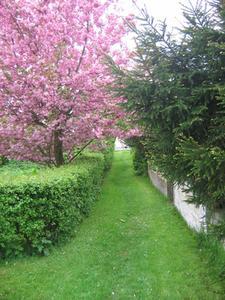 Busk Hedge Planter