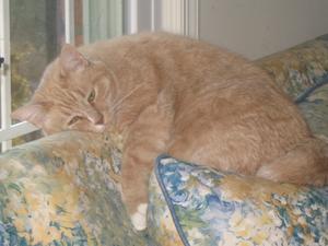 Hvordan at slippe af med en fed pose på en kat