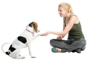 Sådan laver du dine egne Epsom salt omslag til en hunds pote