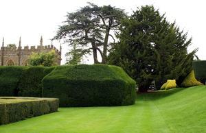 Have Box Hedge Planter