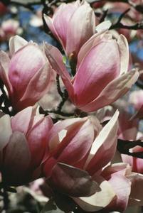 Karakteristik af ikke-Blomstrende Planter