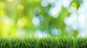 Hvordan til at vokse en græsplæne i lerjord