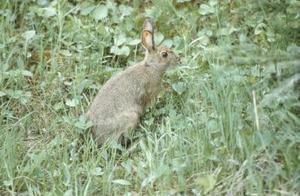 Hvor høj til at gøre et hegn til at holde ud kaniner