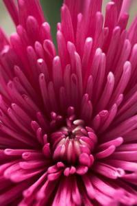 Blomstrende planter, der ikke tiltrækker bier