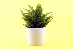 Hvordan man laver en Paper Bag Flower Pot