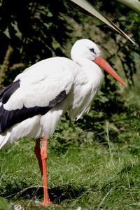 Stork baby shower temaer