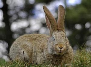 Kanin-resistente planter og buske