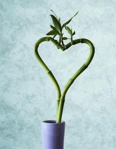 Sådan at beskære Bamboo House Planter