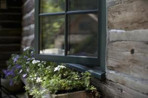 Shade-elskende planter til en altankasse