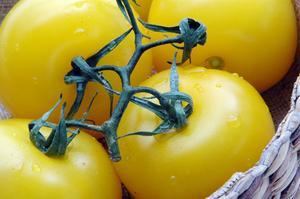 The Best Yellow tomatsorter