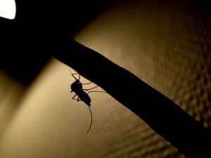 Mosquito & Mole Repellent Fra Castor Bean Planter