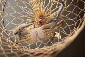 Sådan krabbe med en Net