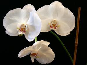 Hjemmelavet Orchid Gødning