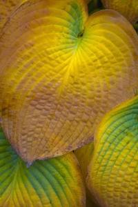 Magnesiummangel i Planter