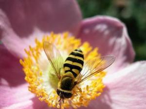 De typer af Bees & Sådan slippe af med dem